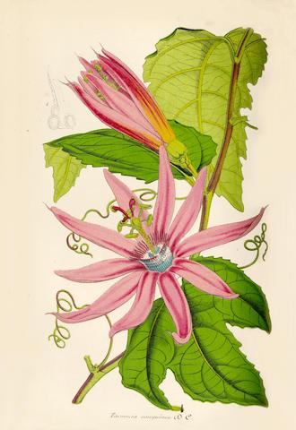 LEMAIRE (CHARLES) Le jardin fleuriste, journal général des progrès des intérets horticoles et botani
