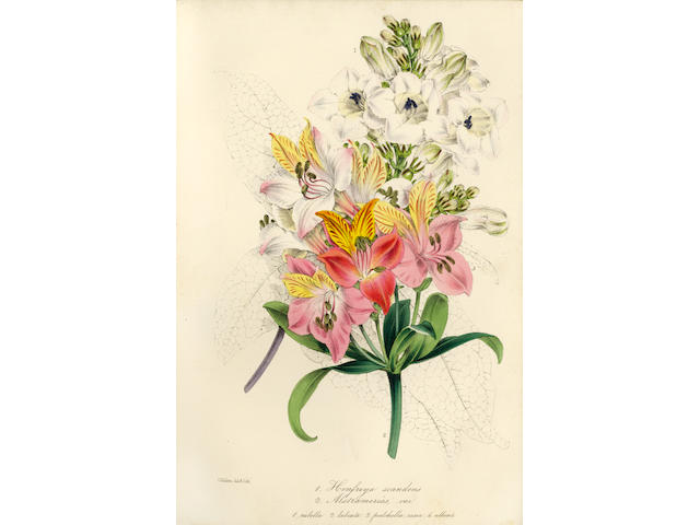 PAXTON (JOSEPH) Magazine of Botany and Register of Flowering Plants, 13 vol. only (of 16, wanting vo