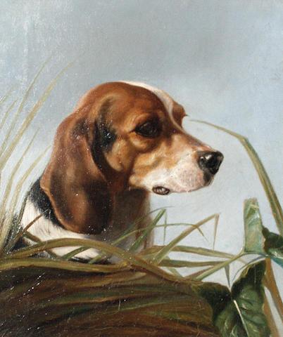 Follower of George Earl (British, 1824-1908) A Beagle 36 x 31cm (14 3/16 x 12 3/16in).