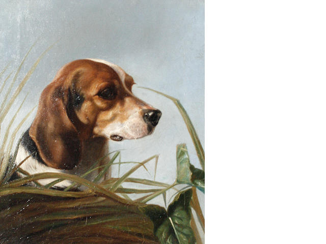 Follower of George Earl (British, 1824-1908) A Beagle 36 x 31cm (14 3/16 x 12 3/16in).