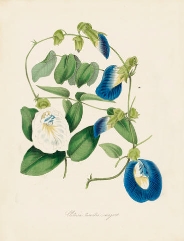 BURNETT (M.A.) Plantae Utiliores; ; or, Illustrations of Useful Plants Employed in the Arts and Medicine, 4 vol. in 2