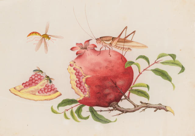 Circle of Youqua (Chinese, active circa 1840-1870) Insects eating a pomegranite