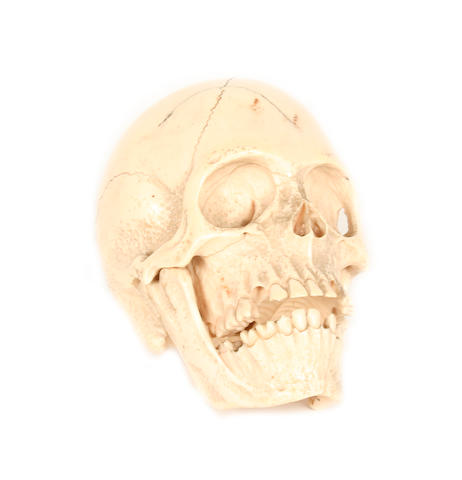 An early 20th century carved ivory model of a human skull