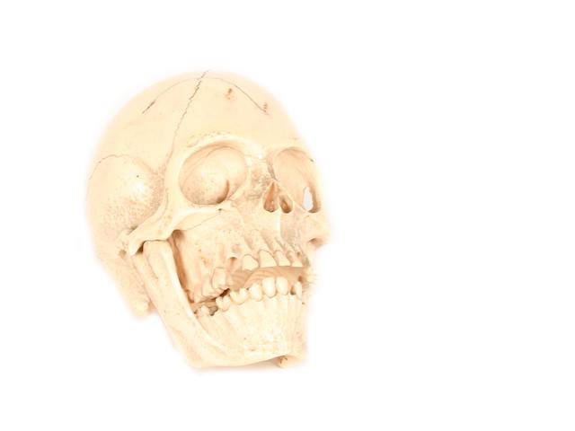 A carved ivory skull
