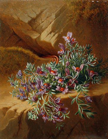 Josef Schuster (Austrian, 1812-1890) Alpine flowers, a pair each 18.5 x 14.5cm (7 5/16 x 5 11/16in), (2).