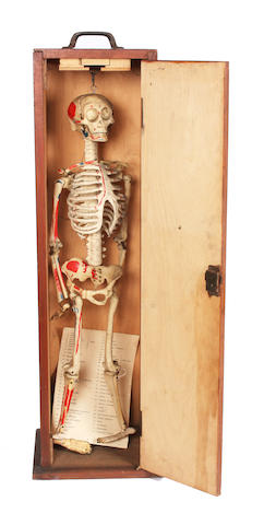 A 1920/30s anatomical rubber and bone model of an infant skeleton (2)
