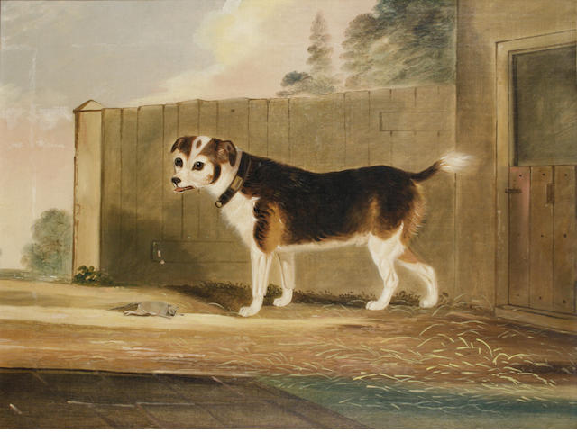 John R. Hobart (British, fl.1828-1858) Jack Russell with rat