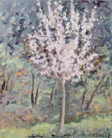 S Linhart Cherry Blossom