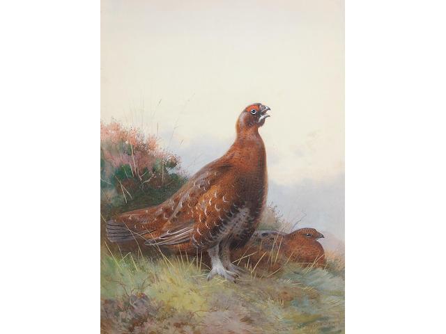 Archibald Thorburn (British, 1860-1935) 'The Morning Call'