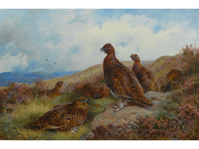 Archibald Thorburn (British, 1860-1935) Red Grouse packing