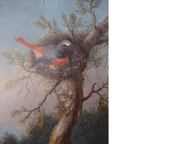An album featuring prints and watercolours of birds, flowers and figures studies.
