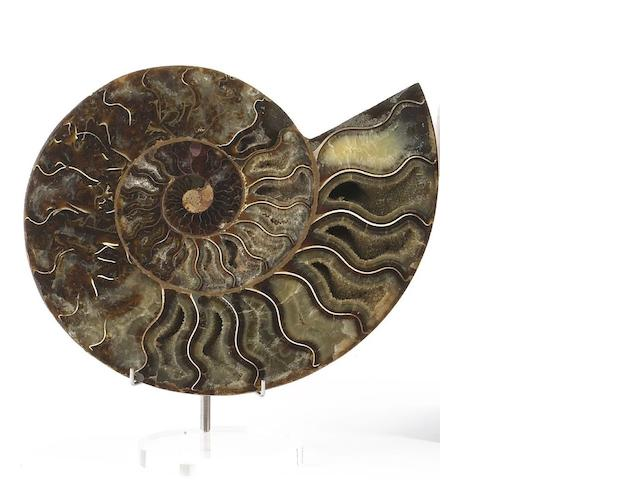A pair of cut and polished ammonites, Madagascar, (4).