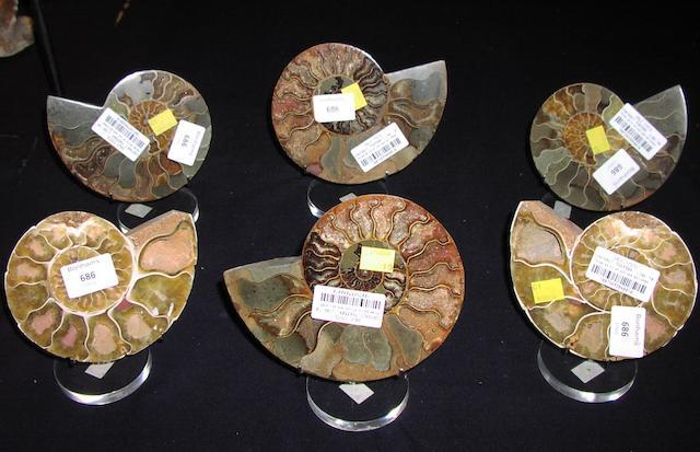 Three pairs of cut and polished ammonites, Madagascar, (12).