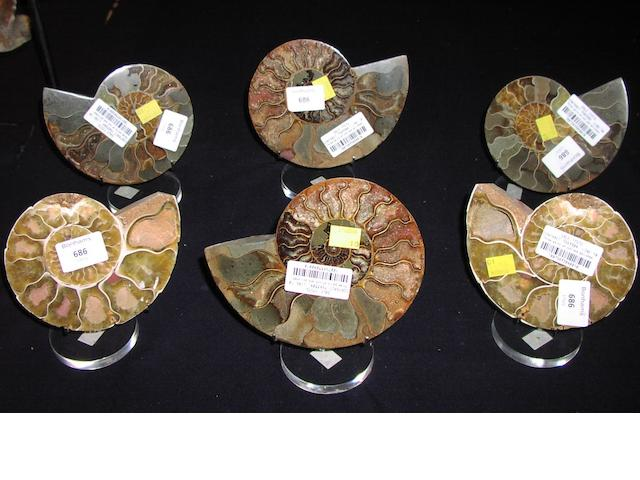 Three pairs of cut and polished ammonites, Madagascar, (12).