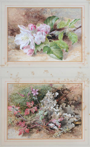 Helen Cordelia  Angell (British, 1847-1884) Study of apple blossom, and another, study of leaves, a pair in one frame,