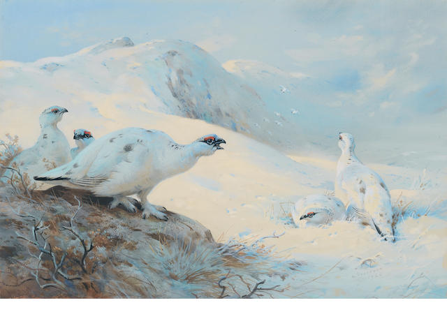 Archibald Thorburn (British, 1860-1935) Ptarmigan calling in the snow
