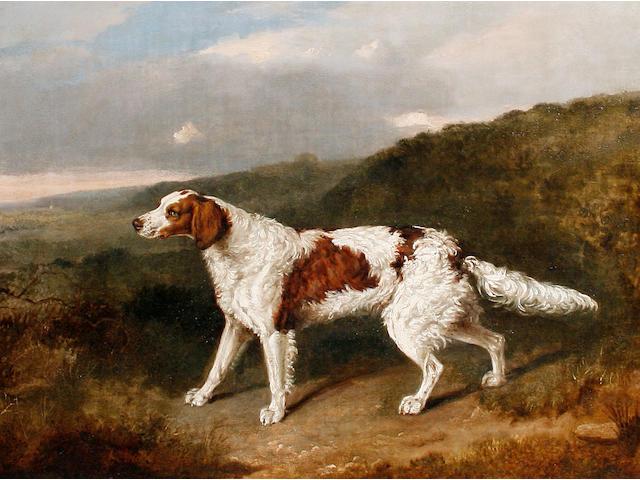 Abraham Cooper (British, 1787-1868) A Setter in a landscape