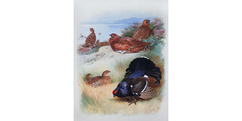 Archibald Thorburn (British, 1860-1935) 'Red Grouse (male, female) Black Grouse (male, female)',