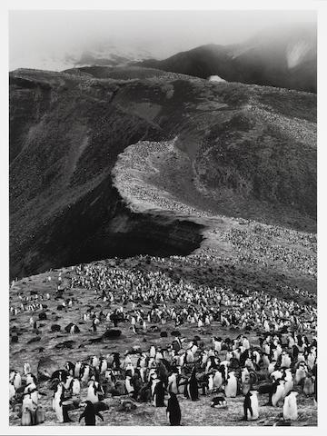 Sebastiao Salgado, Chinstrap Penguins, 2005