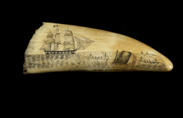 "A fine scrimshawed and polychromed sperm whale's tooth ""Ship Favorite"", dated 1836, 7.8in(19.7cm) long"