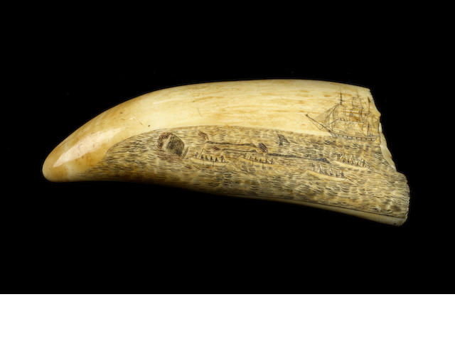 "A fine scrimshawed and polychromed sperm whale's tooth ""Ship Favorite"",  dated 1836,  7 3/4in (19.7cm) long"