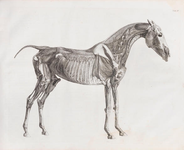 STUBBS (GEORGE) The Anatomy of a Horse. Including a Particular Description of the Bones, Cartilages, Muscles, Fascias, Ligaments, Nerves, Arteries, Veins, and Glands
