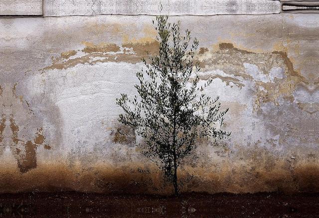 Abbas Kiarostami (Iran, born 1940) Wall,
