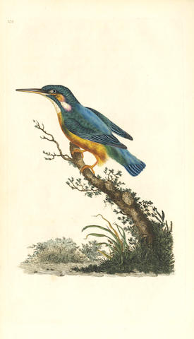 DONOVAN (EDWARD) The Natural History of British Birds; or, a Selection of the Most Rare, Beautiful, and Interesting Birds Which Inhabit this Country, 5 vol.