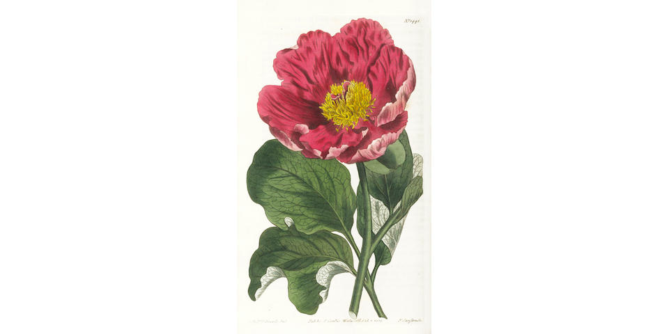 CURTIS (WILLIAM)] The Botanical Magazine; or, Flower-Garden Displayed, vol.1-60, and General Index for volumes 1-53