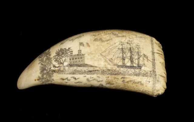 Partially Polychromed Scrimshawed Whales Tooth - English and French frigates