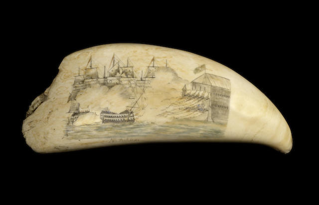 Large Scrimshaw Whales Tooth - Ship  Recovery off Falklands Islands