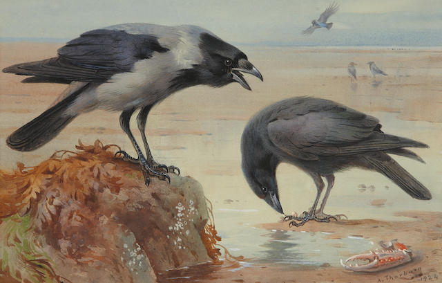 Archibald Thorburn (British, 1860-1935) Hooded crow and carrion crow