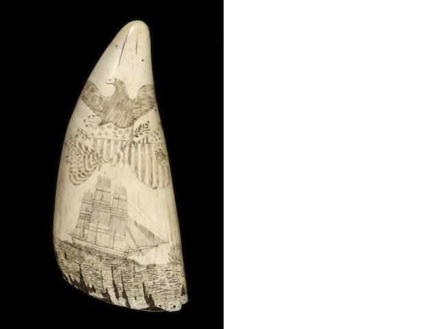 A large scrimshawed whale's tooth,  mid 19th century,  8 1/2in (22cm) long; weight 750 gms