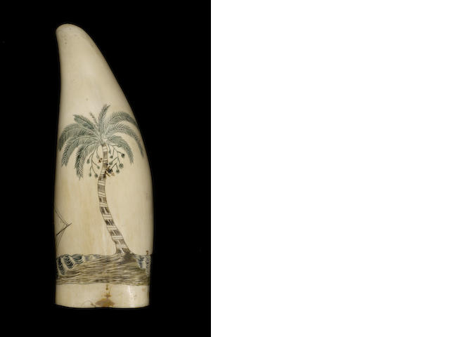 An attractive polychromed and scrimshawed whale's tooth,  mid 19th century,  6 1/2in (16.5cm) long; 450 gms