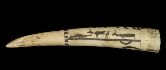 A late 19thC scrimshaw walrus tusk, 8.3in(21cm)long.