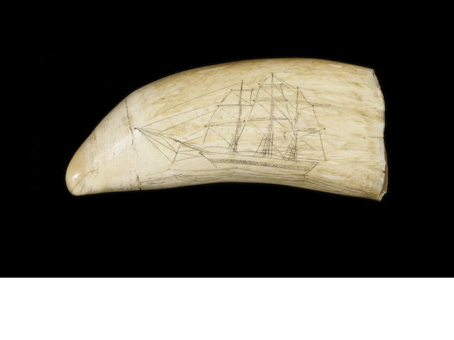 A 19thC decorated whale's tooth,   6in(15cm)long.