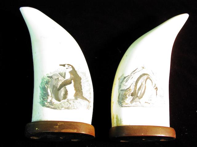 A pair of decorated whale's teeth, 6.5in(16.5cm)high each 2