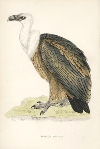 MORRIS (FRANCIS ORPEN) A History of British Birds, 8 vol.