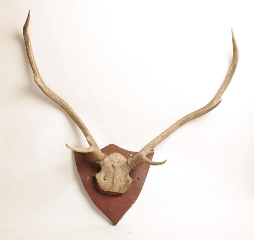 Two pairs of red deer trophy antlers