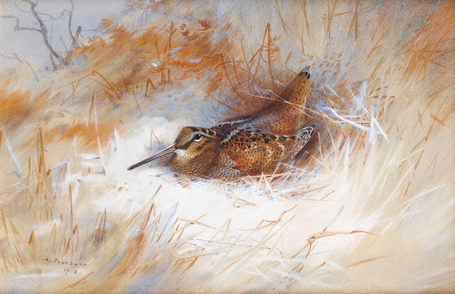 Archibald Thorburn (British, 1860-1935) Woodcock