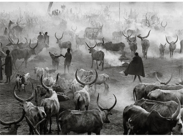Sebastião Salgado (Brazilian, born 1944) Dinka Cattle Camp of Amak, Southern Sudan, 2006 Paper 50.5 x 60.8cm (19 7/8 x 24 in), image 36.9 x 51cm (14 1/2 x 20in).