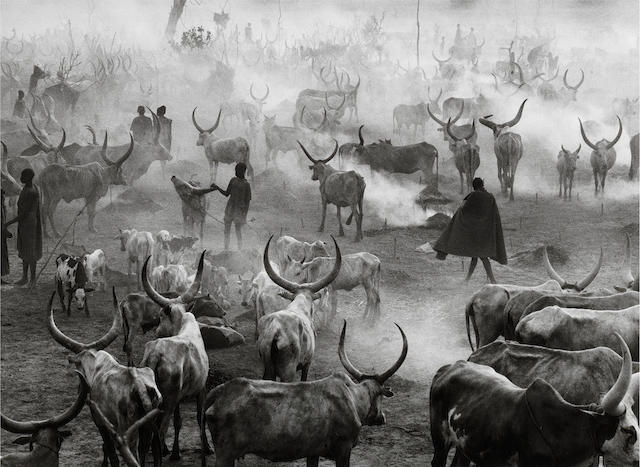 Sebastião Salgado (Brazilian, born 1944) Dinka Cattle Camp of Amak, Southern Sudan, 2006