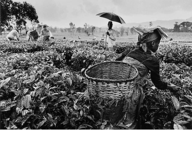 Sebastião Salgado (Brazilian, born 1944) Workers, Tea Plantation, Rwanda, 1991 Paper 50.8 x 60.6cm (20 x 23 7/8in), image 35 x 51.5cm (13 3/4 x 20 1/4in).