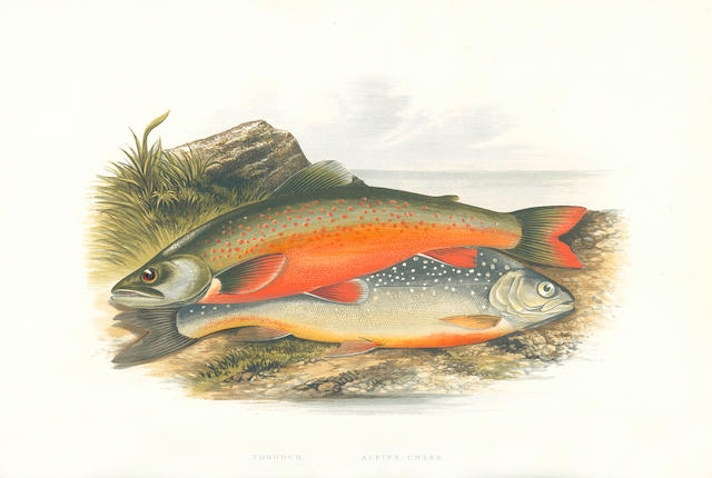 HOUGHTON (WILLIAM) British Fresh Water Fishes, 2 vol.