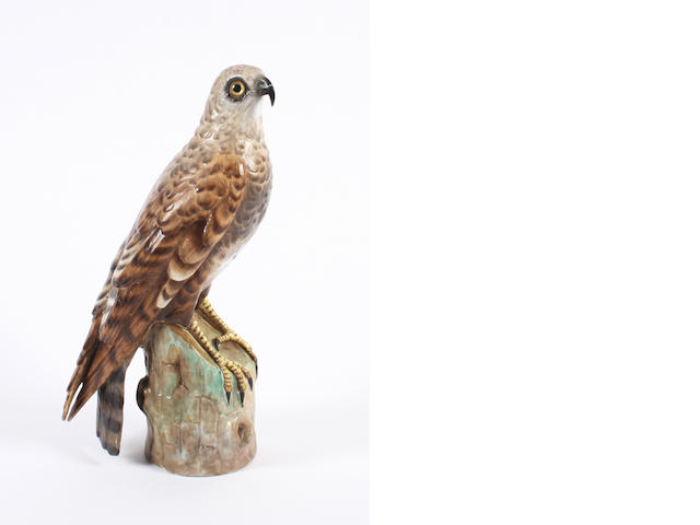 An Ernst Bohne model of a hawk  Late 19th Century.