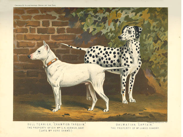DOGS SHAW (VERO KEMBALL) The Illustrated Book of the Dog