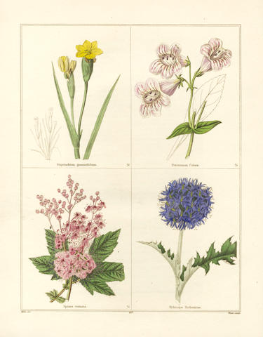 MAUND (BENJAMIN) The Botanic Garden, 13 vol.; The Auctarium; The Fruitist (bound in one); The Floral Register
