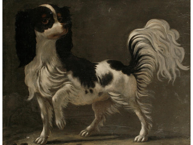 Dutch School 18th Century A Cavalier King Charles spaniel with front paw up