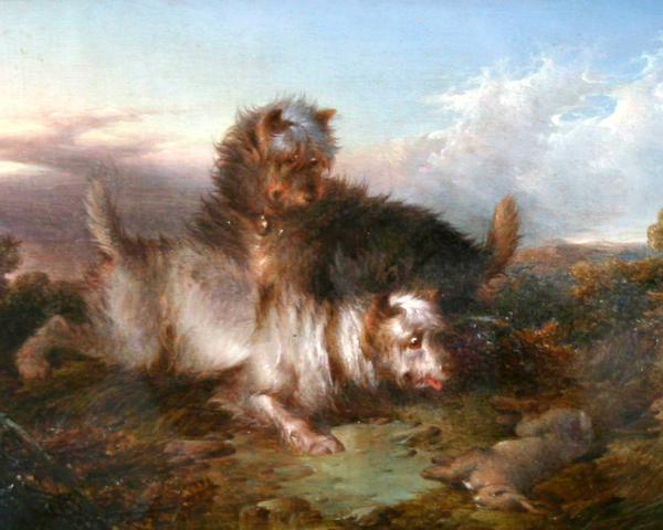 Paul Jones (British, fl. 1856-1879) Two terriers with rabbit