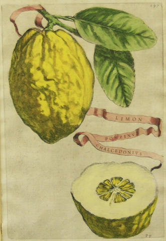 Giovanni Battista Ferrari (1584-1655) Botanical studies of Citrus Fruit, from Hesperides, a pair